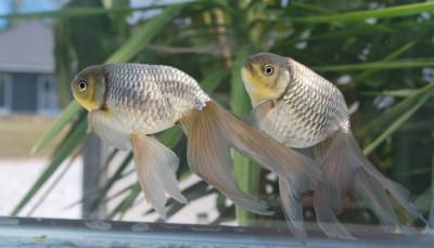 Goldfish Archives - acerlaptop.fashion24.com.ng